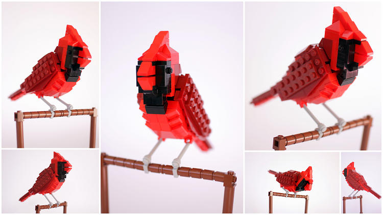 <p>Norman the Northern Cardinal looks good in red.</p>