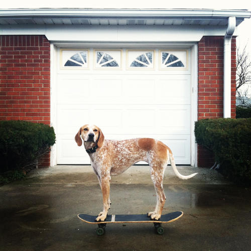 <p>Maddie and her human sidekick Theron Humphrey made photos of a coonhound standing on things into an Internet sensation and, up next, a book. Read about their story <a href=&quot;http://www.fastcocreate.com/1682046/how-maddie-got-on-things-and-became-one-of-the-webs-most-adorable-sensations#1&quot; target=&quot;_self&quot;>here</a>.</p>