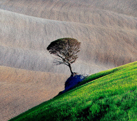 <p>A tree blends into a scene of wonderful composition at a canted angle against a rolling hill.</p>