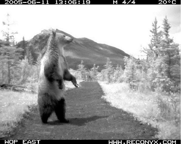 <p><em>Bear 71</em> was created using footage from hidden cameras in a forest.</p>