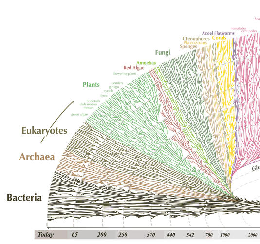 <p>So we start with the very basic--bacteria and cellular life without nucleuses. These life-forms have diversified in a slow and steady pace, seemingly unaffected by extinctions.</p>