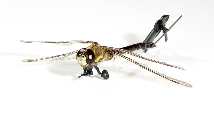 <p>Job van der Molen uses model kits to weaponize insects.</p>