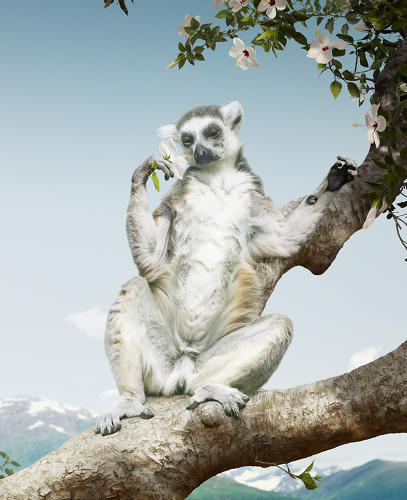 <p>A lemur exults with a strangely human expression in <em>Untitled #169</em>, from 2011.</p>