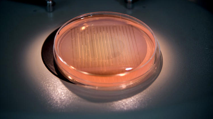 <p>Organovo's printers use 3-D printing technology to &quot;print&quot; lines of cells like those shown here.</p>