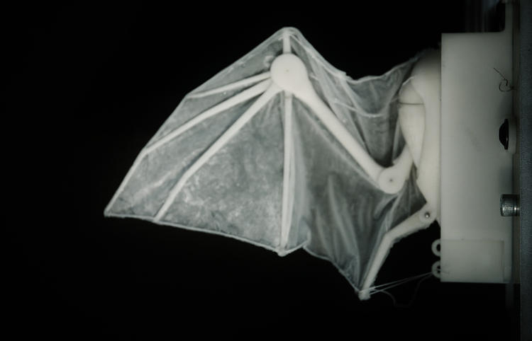 <p>Using a 3-D printer, the team prototyped dozens of model wings made of silicone skin and plastic bones.</p>