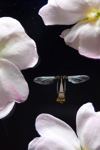 <p>The bees also have a body of superlight airfoil wings and a pollination appendage.</p>