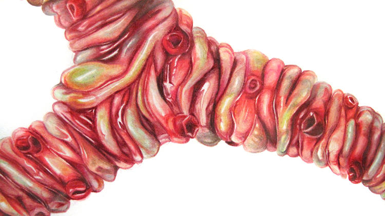 <p>Haines has created extraordinarily lifelike models of new and improved human organs from molded silicon. She hopes that someday they'll be functional. Here, a detailed anatomical illustration of the 'tremomucosa expulsum' organ, which can vibrate to dislodge mucus and help cystic fibrosis patients--using rattlesnake muscles.</p>
