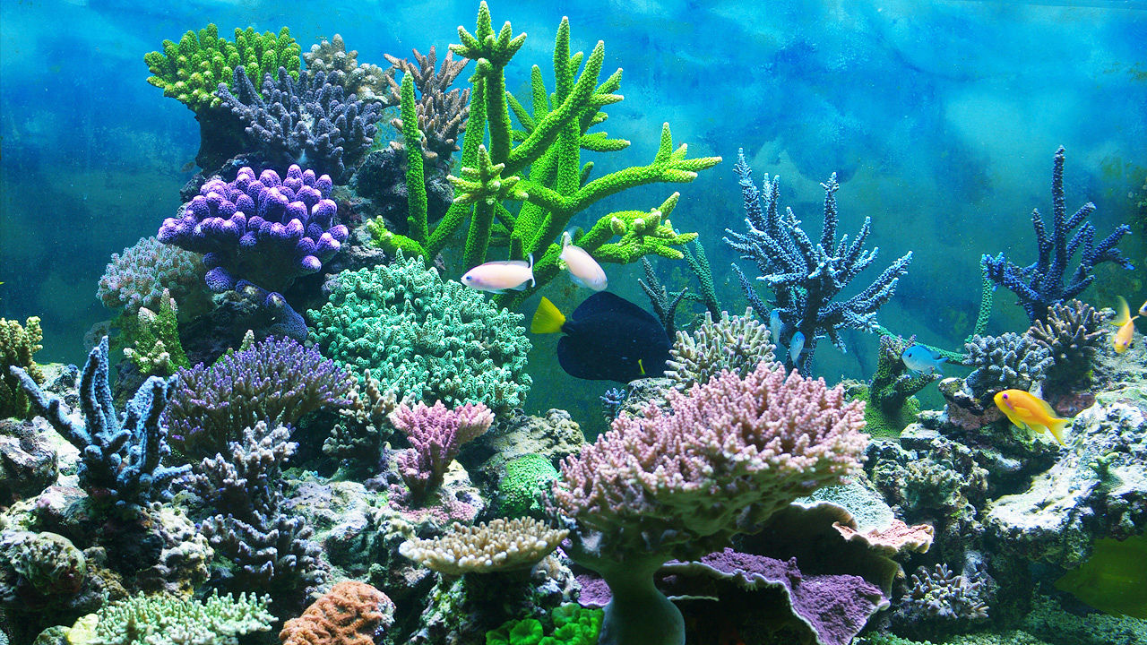 MarineBio Expeditions :: destinations to study marine life...