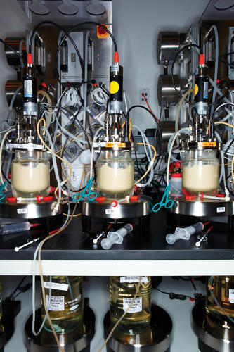 <p>Making Biofuel Step 4: Promising yeast strains are further tested in small fermenters.</p>