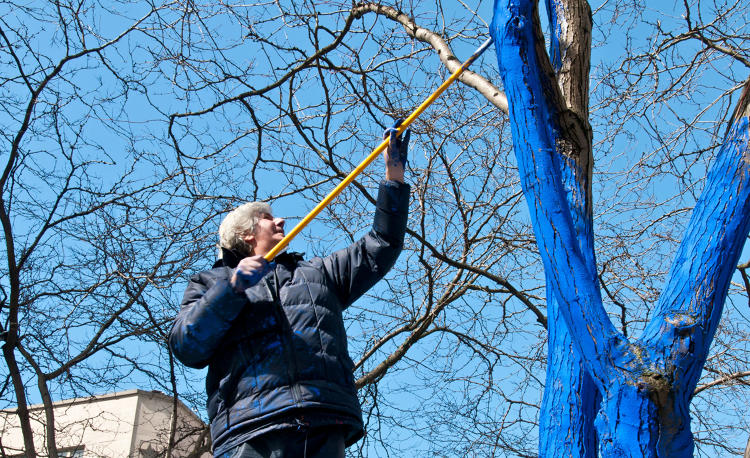 <p>Konstantin Dimopoulos painting trees blue in Seattle.</p>