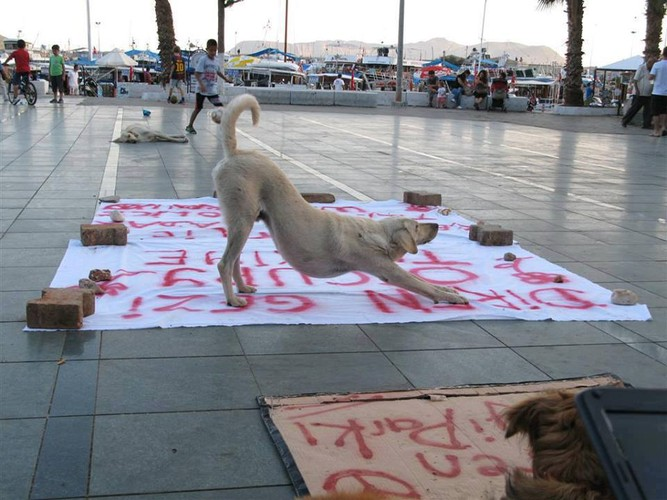 <p>One veterinary doctor cited on social media estimated last week that at least 1,000 birds, 60 cats, and eight dogs had been killed to date by the excessive use of tear gas near Taksim alone, which is adjacent to Gezi park.</p>