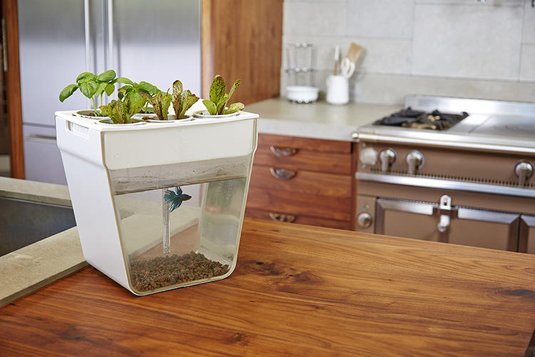 <p>The AquaFarm costs $60 bucks and comes fully loaded with everything you need to set it up right out of the box and a coupon for the fish from a new partner: Petco.</p>