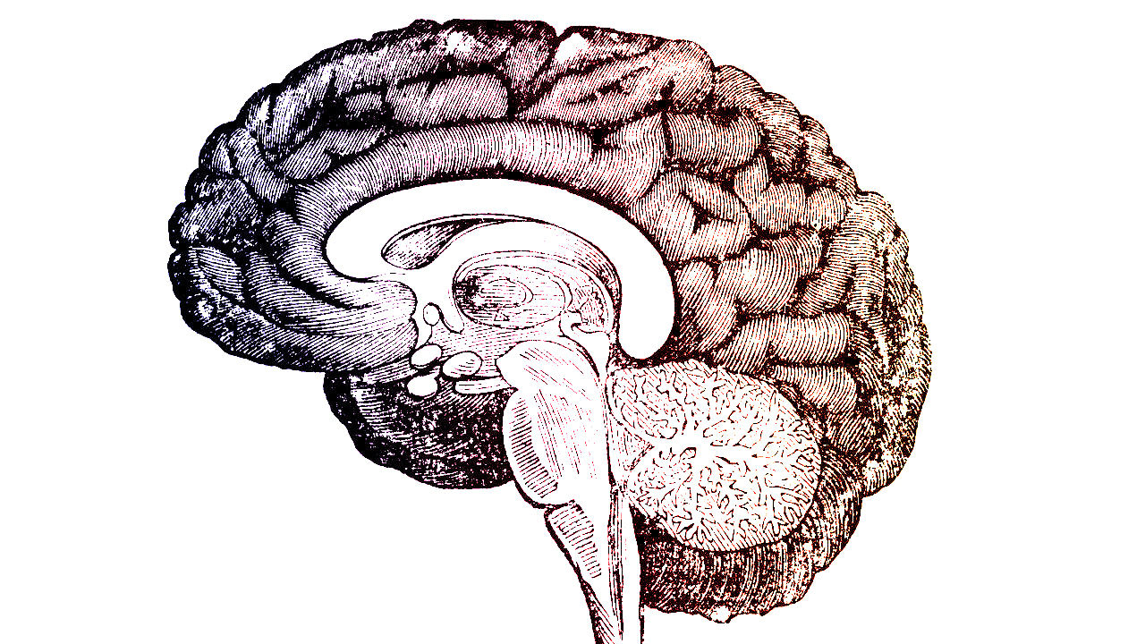 Sci Fi Brain : Not science fiction a brain in box to let people live