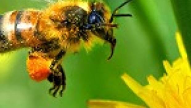 Neonicotinoids - Bayer Bee Care Center