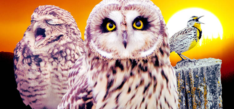 <p>Research by the London School of Economics and Political Science found that people with higher IQs are more likely to be night owls. <em>Fast Company</em> contributor Lydia Dishman digs up a few of them to <a href=&quot;http://www.fastcompany.com/3000732/what-successful-night-owls-get-done-bed&quot; target=&quot;_self&quot;>share tips on how to best burn the midnight oil</a>.</p>