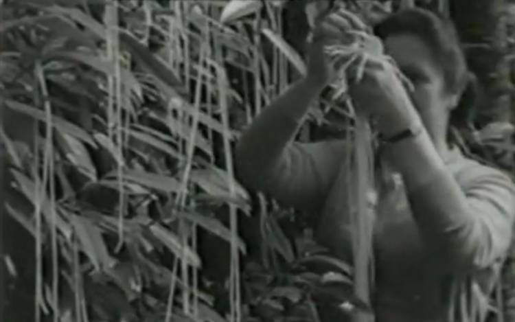 <p>The BBC's masterful 1957 spaghetti harvest joke still sets the bar for modern April Fools' day.</p>