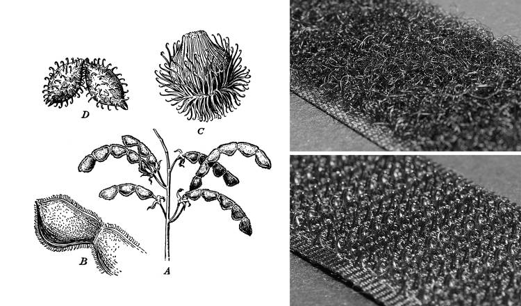 <p>Burrs, the natural inspiration for Velcro.</p>