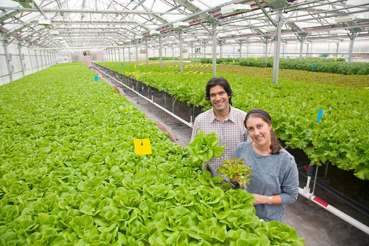 <p>Viraj Puri and Jennifer Nelkin run <a href=&quot;http://gothamgreens.com/&quot; target=&quot;_blank&quot;>Gotham Greens</a>, a 15,000-square-foot hydroponic greenhouse facility, above an old bowling alley.</p>
