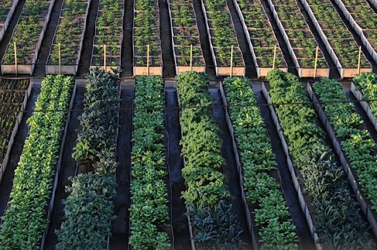 <p>Urban farms have popped up all over in the last decade. But not many operations are on the scale of Sole Food in Vancouver.</p>