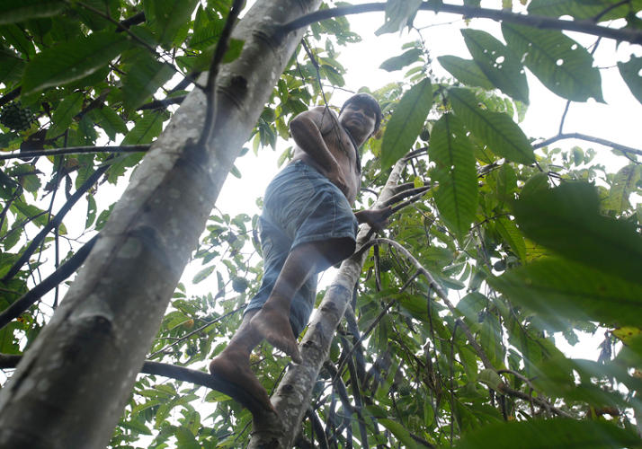 <p>To combat the aggressive logging that is destroying the Surui's 600,000 acres of land, the tribe has mounted an ambitious reforestation plan. Cell phones have allowed the tribe to document the clear-cut areas in the forest and form planting plans.</p>