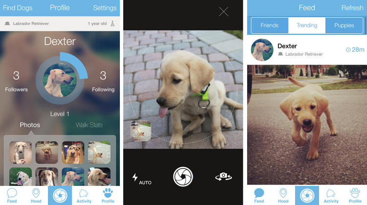 <p>The thing we've all been waiting for has finally arrived: a social network for dogs. At long last your mutt can have its own personalized profile complete with photos and the ability to &quot;sniff&quot; nearby dogs.</p>