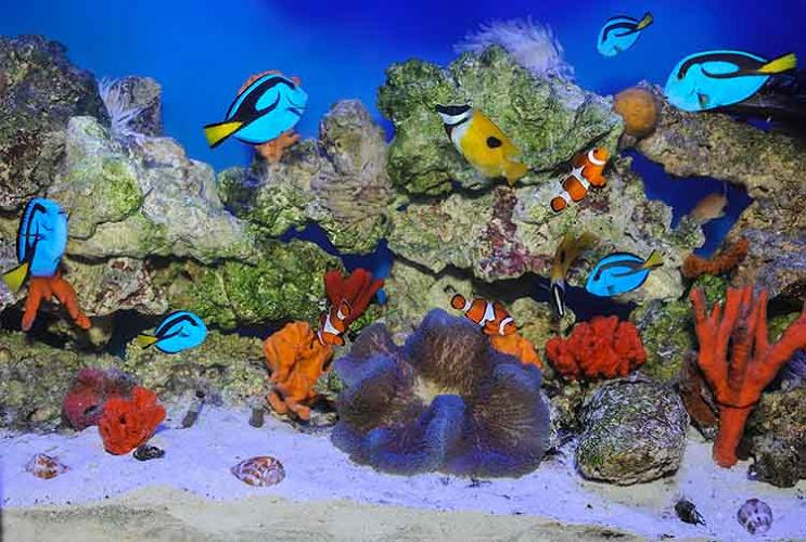 <p>This aquarium may look pretty, but almost everything in it is toxic. Many sea creatures use chemical defenses to deter predators. Others, such as anemones, use poison to capture their prey. Thousands of marine invertebrate toxins could provide a rich source of potential medicines that treat problems from pain to Parkinson's disease.</p>
