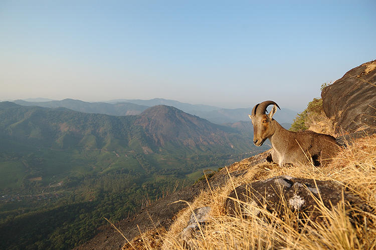 <p>The International Union for the Conservation of Nature has outlined the top 78 most &quot;irreplaceable&quot; sites in the world. The Western Ghats, a mountain range in western India, is home to the Nilgiri tarh (or ibex). There are only 2,000 left.</p>