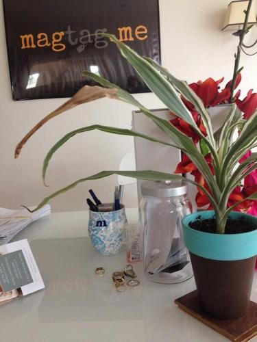 <p>@Marianne Navada says that her plant, &quot;reminds me that there's always room for growth.&quot;</p>