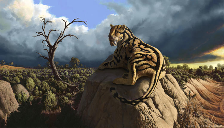 <p>A collaborative painting with Csotonyi's wife, Alexandra Lefort (a planetary scientist and wildlife painter). Hoplophoneus is a 35 million-year-old nimravid, a group of mammals closely related to cats but not cats themselves.</p>