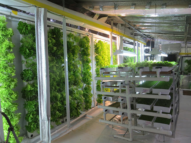 <p>But the partners are making progress to make the idea a reality. They have a prototype &quot;lean green growing machine&quot; and a plan to build a compact, self-contained system constantly producing lettuce, microgreens, spinach, kale and broccoli.</p>