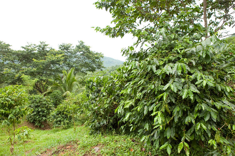 <p>Marley, who lived in the U.S. since he was 12, found a fertile property full of fruits and plants and a community of coffee farmers who lived there.</p>