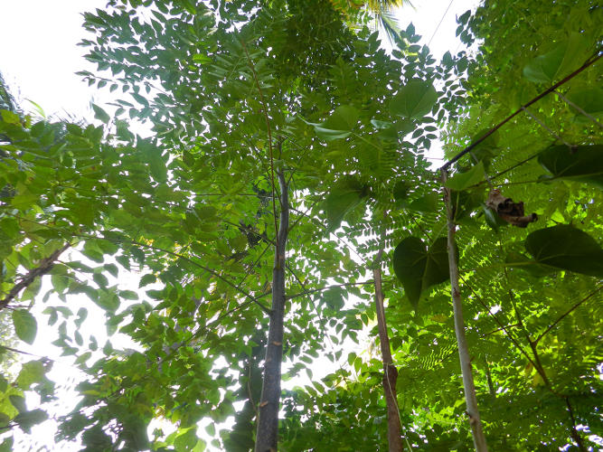 <p>All along, he's viewed planting trees as an efficiency-obsessed engineer.</p>