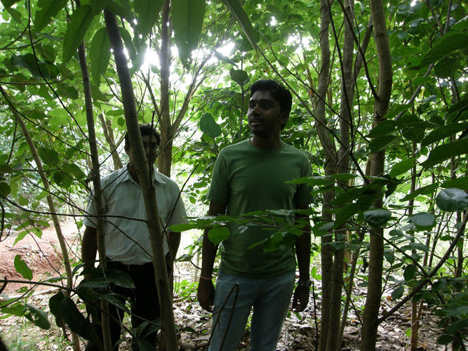 <p>A startup in India has figured out how to make that possible, and now hopes to use its ultra-efficient process to blanket the world's cities in trees.</p>