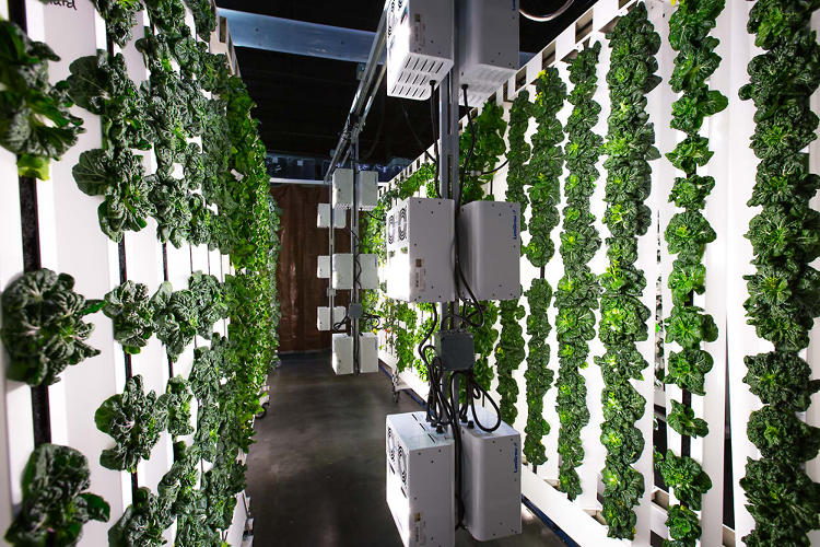 <p>While living walls have been around for a while, they aren't usually used for growing food, and they're usually expensive. Bright Agrotech's system is still a little pricey—a small system starts at $569—but they're working to make it accessible to anyone who wants to grow food.</p>