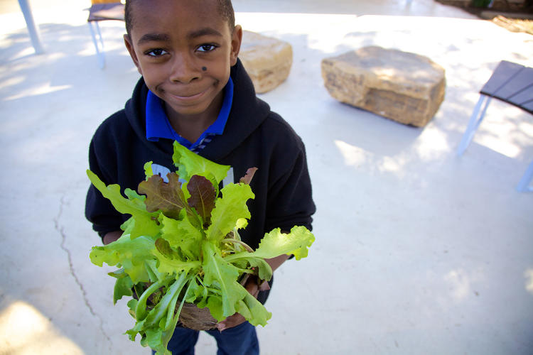 <p>While school gardens are becoming more common--with piles of evidence that they help improve nutrition and even test scores--they're usually built in isolation.</p>