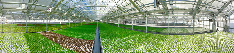 <p>In Chicago, where frigid winters mean that produce is often shipped from thousands of miles away, the new greenhouse will help supply more than a million pounds of leafy greens and herbs to local stores every year.</p>