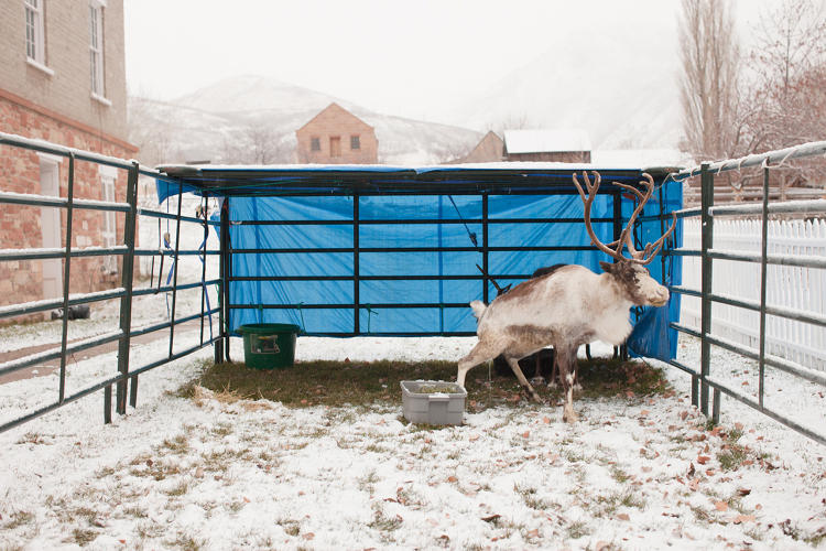 <p>Reindeer Petting Zoo. Salt Lake City, UT. 2013<br /> This Is The Place Heritage Park</p>