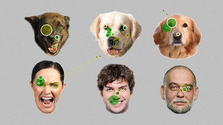 <p>New research shows that dogs read expressions the way humans do, starting with the eyes.</p>
