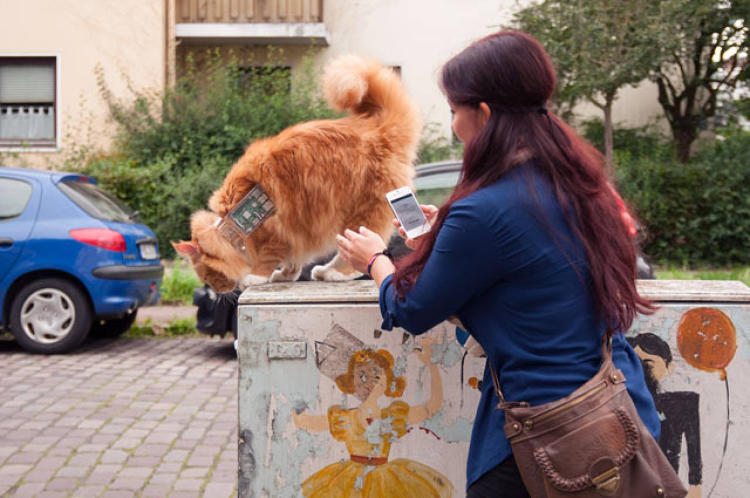 <p>The &quot;Cat Exploit&quot; project is designed to draw attention to how weak Wi-Fi encryption is.</p>