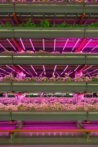 <p>According to one study, vertical farming is expected to be a nearly $4 billion market globally by 2020.</p>