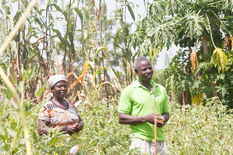 <p>It now wants to expand into West Africa using a $2.5 million grant.</p>