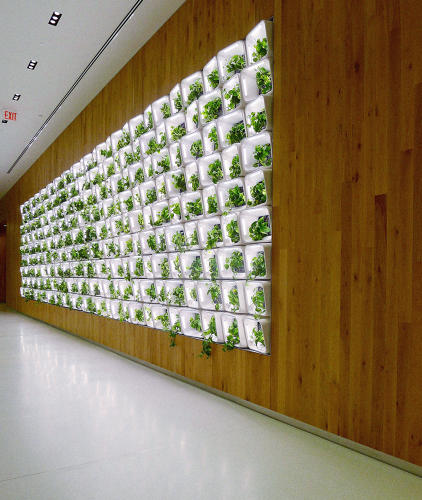 <p>The wall, filled with hydroponically grown plants, is aimed at creating a more soothing, pleasant environment, but that's not what's unique.</p>