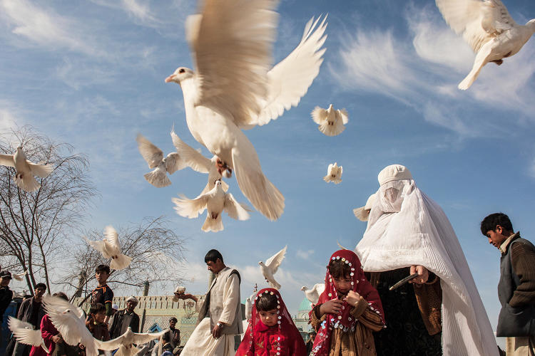 <p>Afghans feed the birds at the <strong>Blue mosque</strong> in Mazar-E-Sharif.</p>