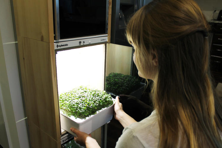 <p>The device can grow vegetables like beets and radishes, salad greens, and herbs like basil and thyme.</p>