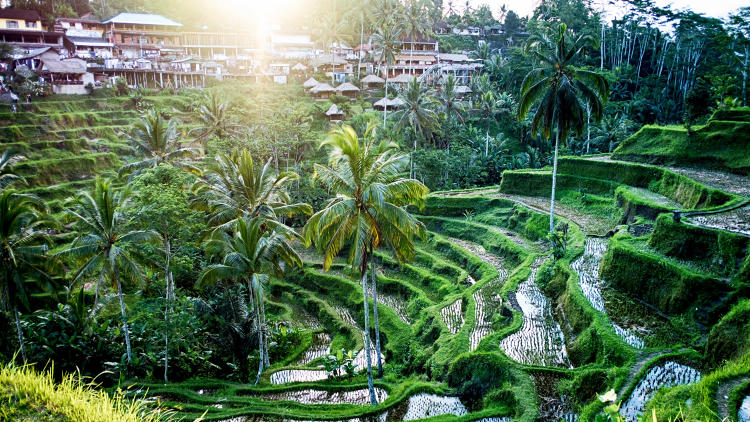 "<p>&quot;I rented an entire house in the rice fields for less than $400 a month,"" says one entrepreneur.</p>"
