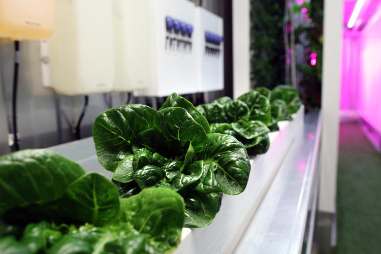<p>When it opens this fall in Brooklyn, a new urban farm will grow a new crop: farmers.</p>