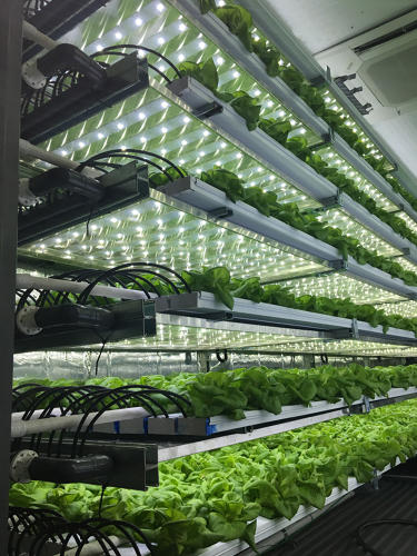<p>The 3D tour shows the details of the tiny farms, from the irrigation system to lettuce at various stages of growth.</p>