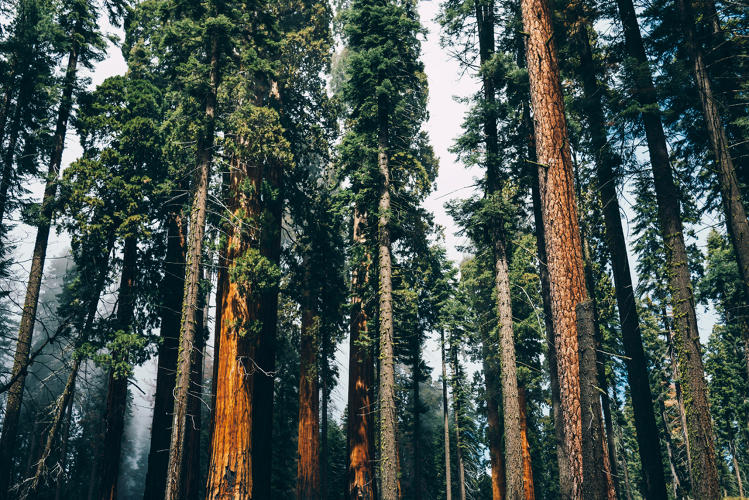 <p>In Sequoia National Park, researchers studying a section of forest over the last 30 years have realized that trees there are now dying twice as fast.</p>