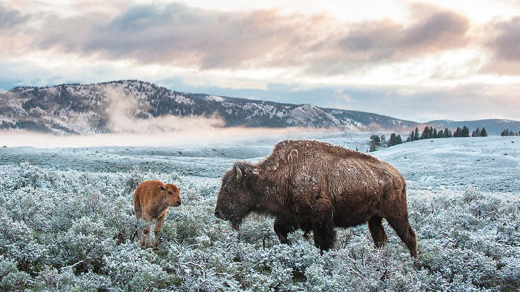 <p>In Yellowstone National Park's northeast entrance, there are now 80 more days per year above freezing than there were in the 1960s.</p>