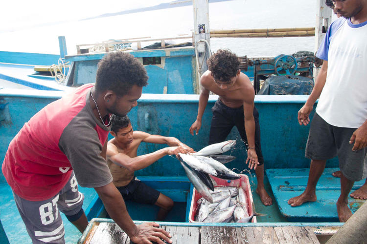 <p>While various nonprofits and government agencies are working on tracking fish through the supply chain, the various tracking systems can't easily share data.</p>